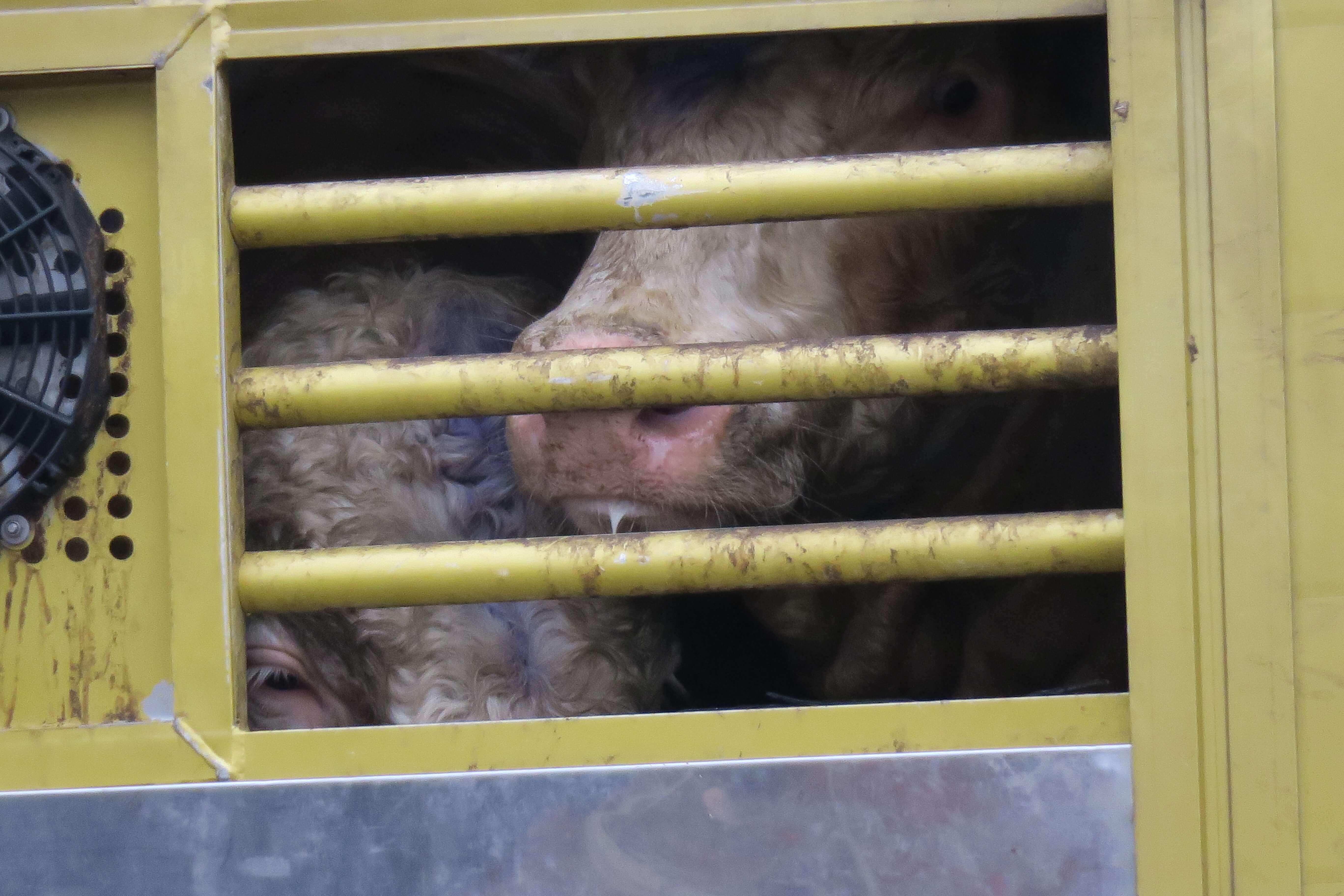 Nein zu EU-Tiertransporten – Redebeitrag am 11.5.2019 in Berlin